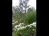 Thumbnail - Gartengestaltung im englischen Stil