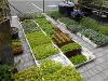 Thumbnail - saisonale Pflanzen und Blumen