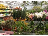 Michel's Gartenmarkt