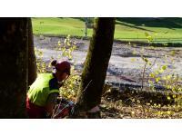 Forstdienstleistung
