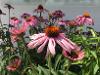 Thumbnail Maly Gartengestaltung 10