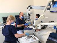 Wurzelkanalbehandlung mit dem Dentalmikroskop