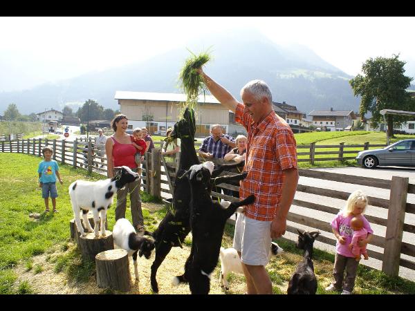 Vorschau - Ziegen - Bachmayerhof All-Inclusive Zillertal