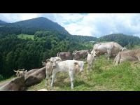 Idylle am Bauernhof