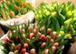 Die ersten Frühlingsboten sind eingetroffen!