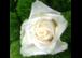! gelernte Floristin gesucht ! (teilzeit)