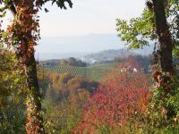Ausblick vom Weingut Kranachberg