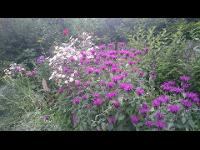 Kräutergarten am Blumenhof Elfi