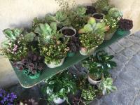 Pflanzen und Geschenkartikel