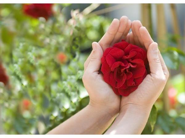 Hand Rose