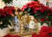 Fröhliche Weihnachten - Wir sind täglich für Sie da!