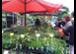 Bio-Jungpflanzenmarkt in der Baumschule Ecker