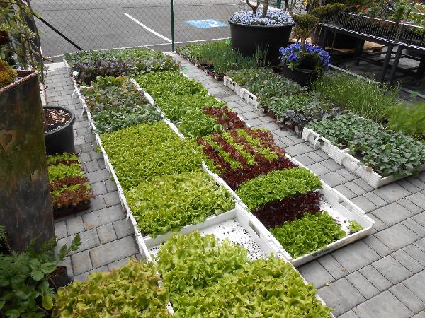 Vorschau - saisonale Pflanzen und Blumen