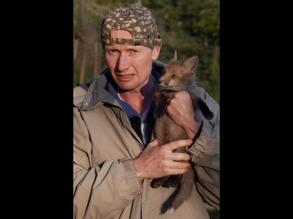 Tierarzt trägt Fuchs