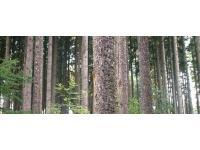 Steirisches Holz