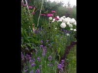 Weiß, lila und Purpur überasu gelungen.