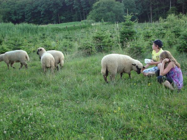 Vorschau - Foto 1 von Urlaub am Bauernhof Anna & Martin Grain
