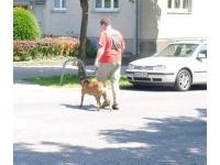 Hundenbetreuung