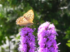 Thumbnail Maly Gartengestaltung 5
