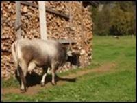 Weideplatz für unsere Kühe