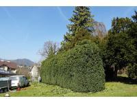 Baumentfernung & Gartenservice Kronberger