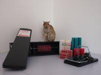Rattenbekämpfung vom Profi