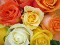 Rosen aus familieneigener Gärtnerei