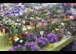Frühlingserwachen bei Gärtnerei Stolzlederer