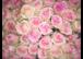 Gratis Rose am Weltfrauentag 08.03.2016