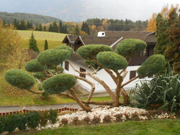Vorschau - Wacholder-Formschnitt - Foto von GARTENGALERIE