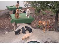 In unserer Tierbetreuung