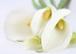 Für jeden ANLASS / Hochzeit / Trauer / Geburtstag