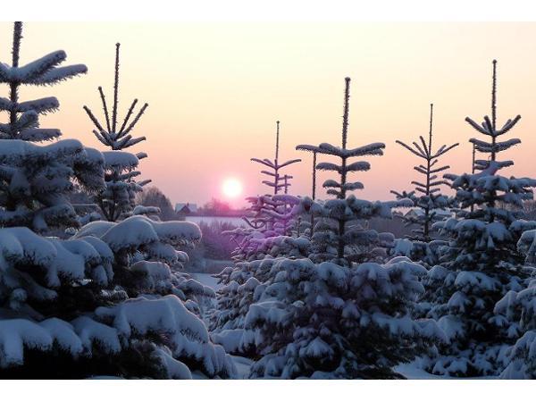 Vorschau - Sonnenaufgang