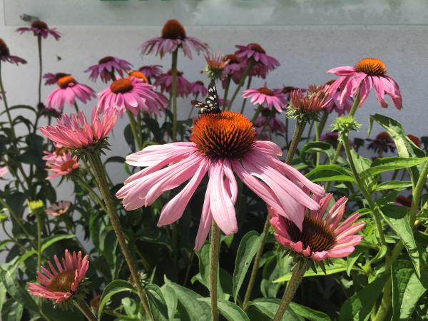 Maly Gartengestaltung 10