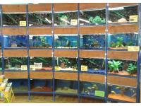 Aquarienabteilung