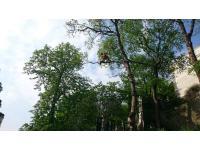 Baumpflege MA