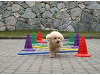 Praxis - Hunde