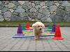Thumbnail Praxis - Hunde