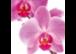 Orchideen zum Muttertag ❤