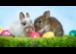 Unseren KundInnen wünschen wir frohe Ostern!