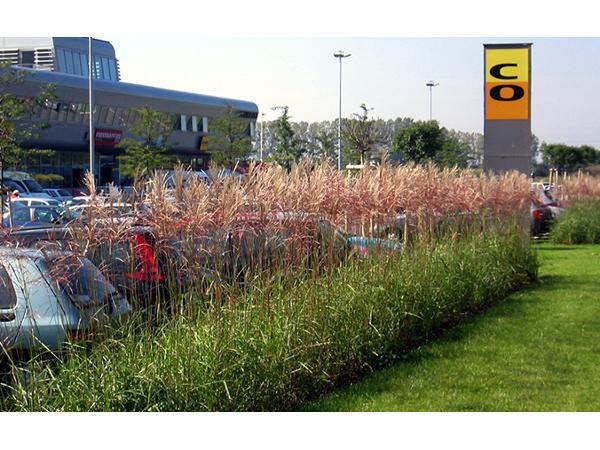 Vorschau - Grün für Wohnbau und Einkaufszentren