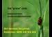 Schädlingsbekämpfung - die grüne Linie