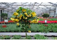 Riegler Blumen GesmbH