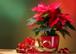 Märchenhafte Weihnachtssterne!