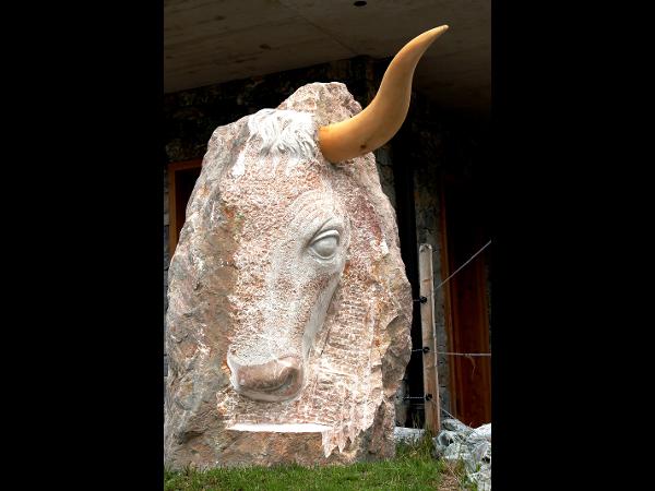 Stier-Kopf