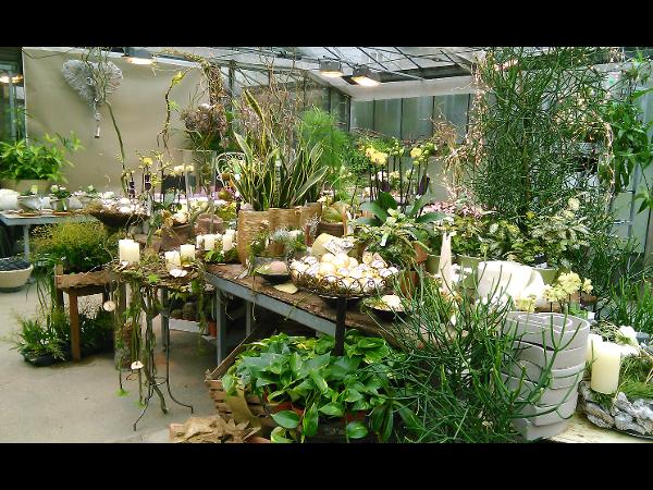 Vorschau - Dschungelfeeling im Glashaus