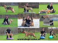 Dogs Reha - Reha Training für Hunde