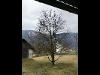 Thumbnail - Obstbaumschnitt