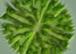 Algen - das Fassadenproblem