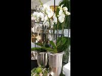 Blumengalerie Awender